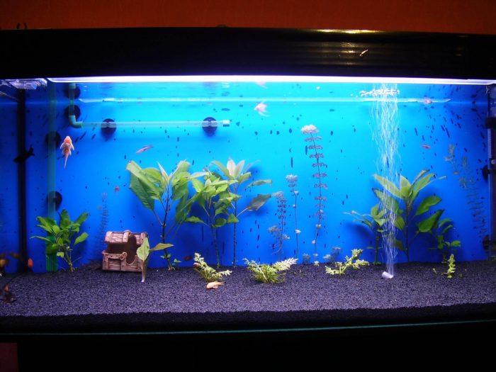 Как наладить «климат» в аквариуме