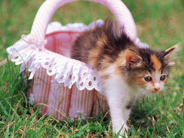 Как подружиться с котёнком, что нужно делать, а что нельзя?