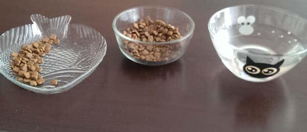 Как правильно мыть предметы кошачьего быта?