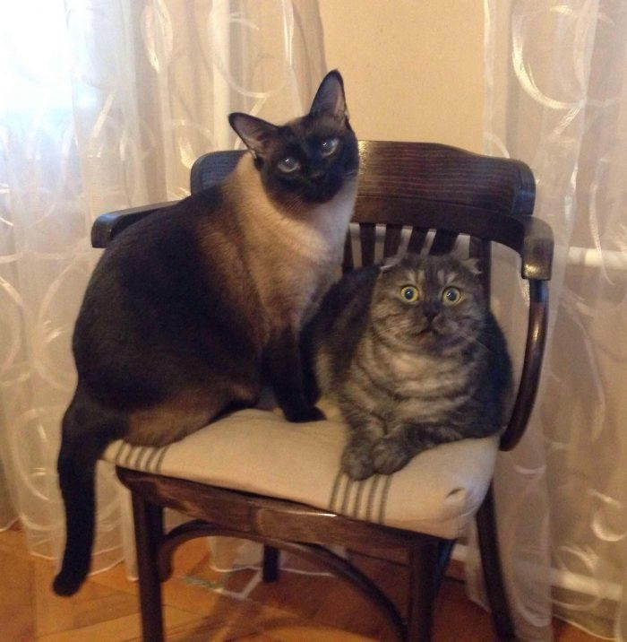 Как правильно организовать сосуществование двух животных в одном доме