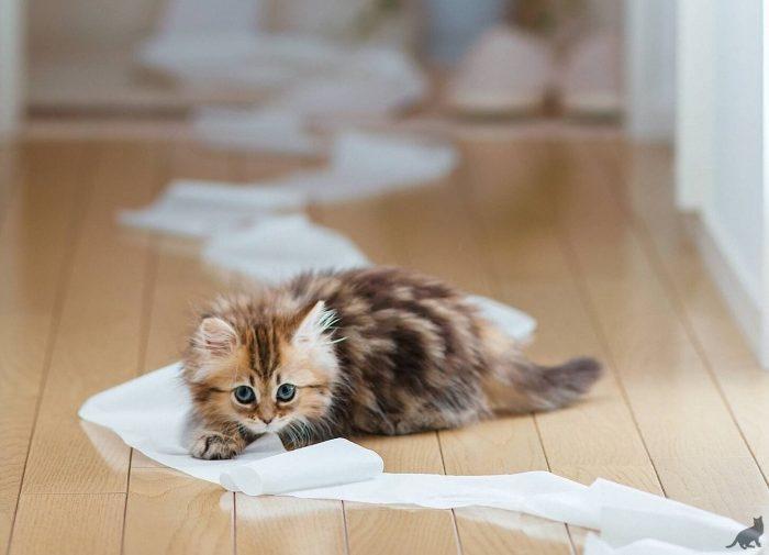 Как правильно ругать котёнка?