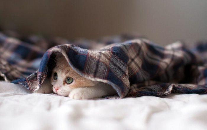 Как себя вести в первые дни после появления котёнка в доме?