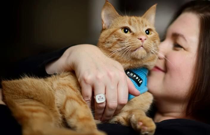Как воспитать кошку более ласковой и домашней