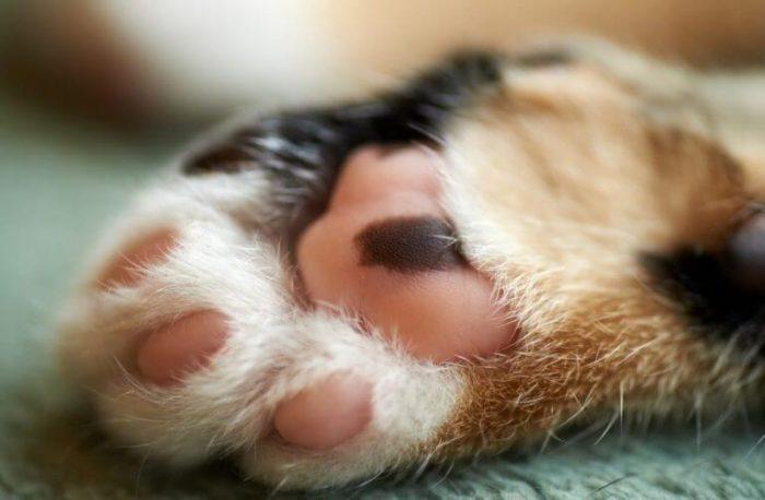 Кошачьи когти: оставить нельзя удалить?