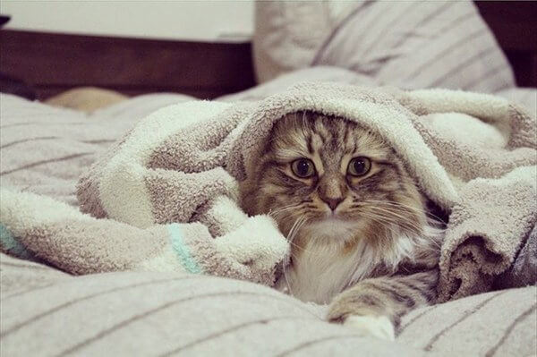 Котёнок будит меня рано утром. Что ему надо?