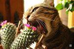 Котёнок ест растения, опасно ли это?