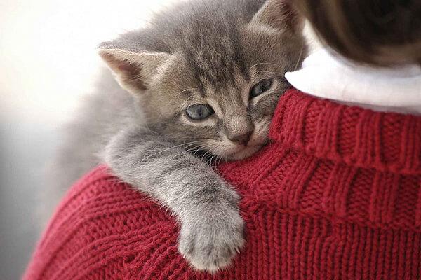 Котёнок нервничает в новой обстановке - что пошло не так?