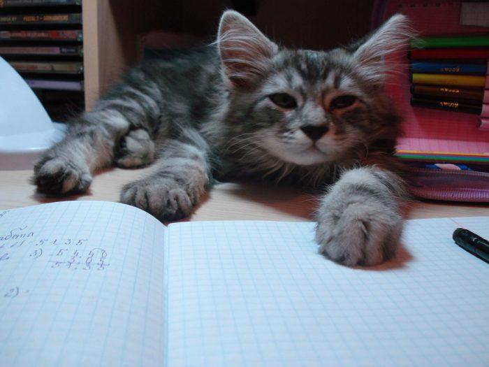 Котёнок стал юниором. Это трудный возраст?