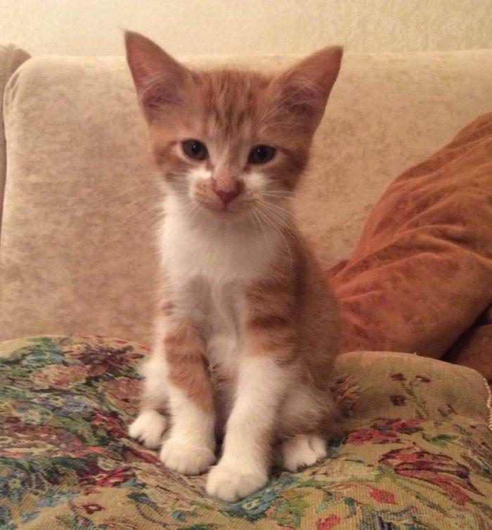 Меня просят взять кошку на передержку. Брать или нет?