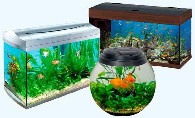 Небольшие аквариумы