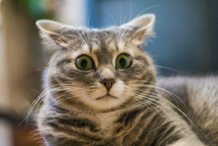 Нет опыта в кормлении котёнка: как не испортить ему пищеварение?