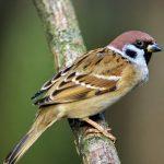 О привлечении птиц на свой участок