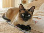 Обладают ли кошки телепатическими способностями?