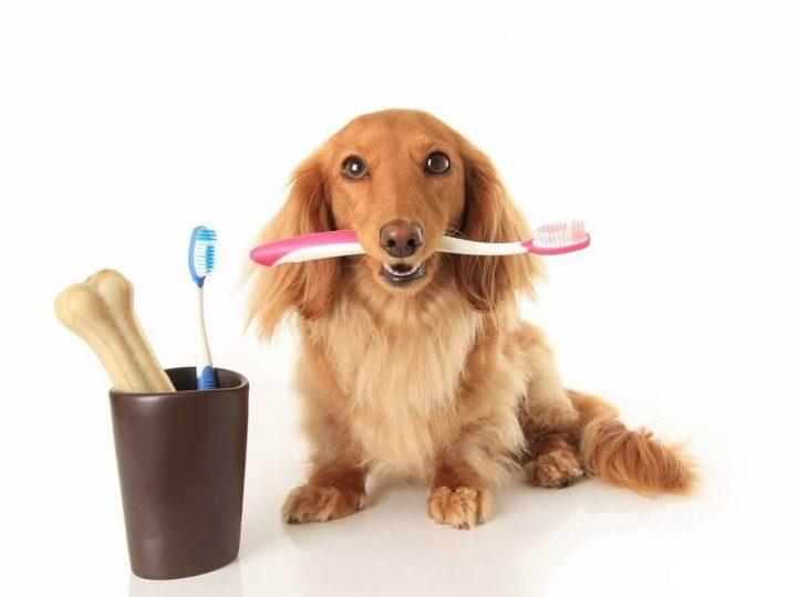 Основы ухода за собакой