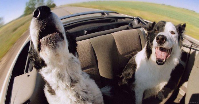 Особенности перевозки домашних животных
