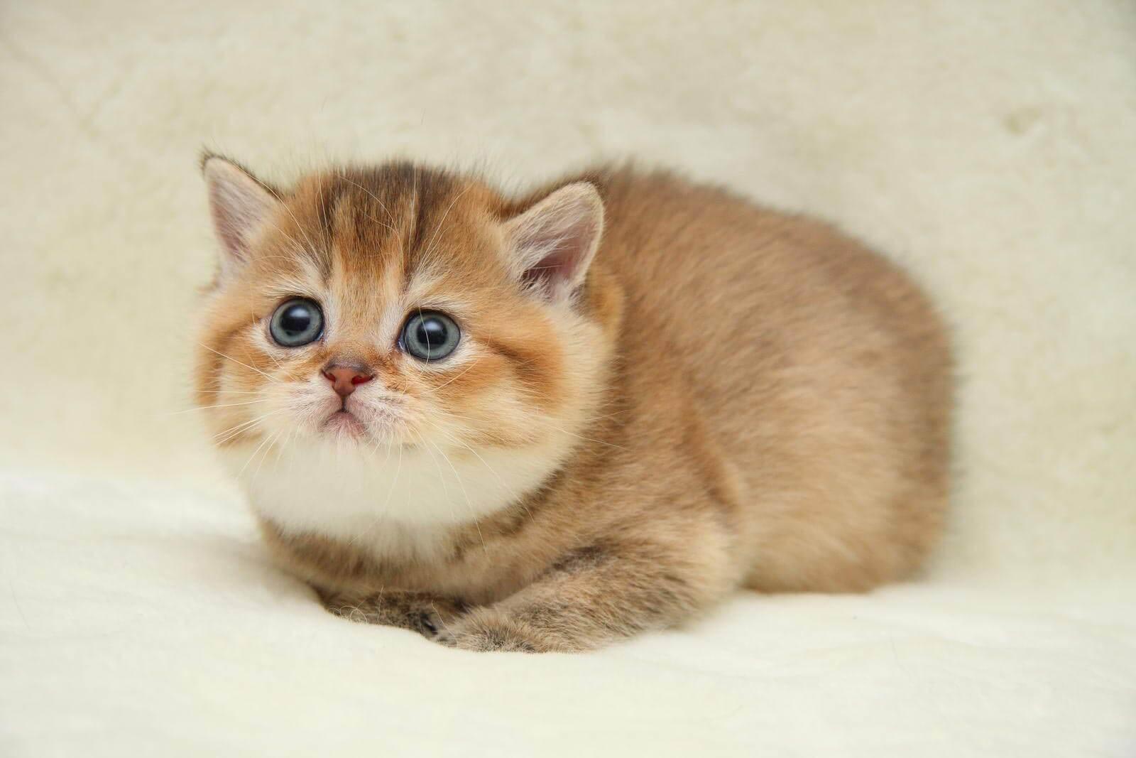 От чего нужно оберегать котёнка, ведь он везде лезет?