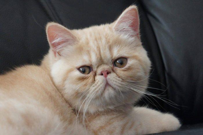 Подготовка к приобретению котёнка