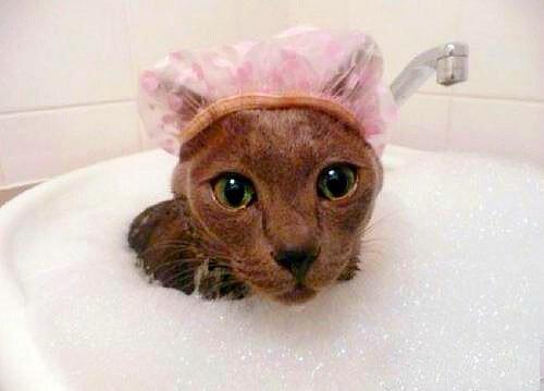 Шампуни для мытья кошек