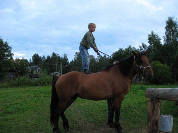 Содержание лошади дома