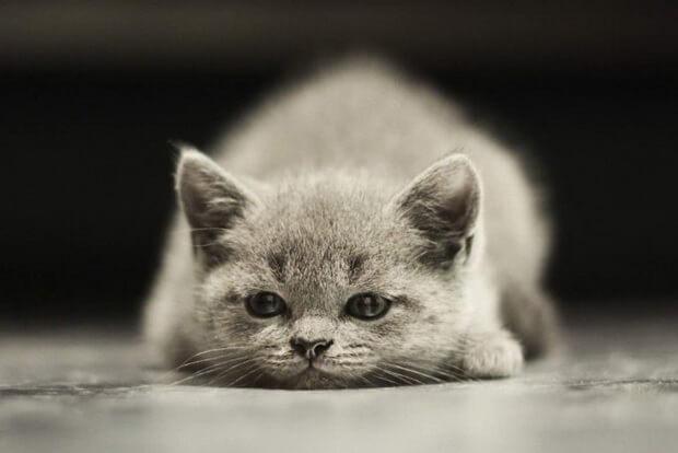 Я сомневаюсь в своих силах... Стоит ли брать котёнка?