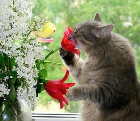 Стоит ли использовать отпугивающие и привлекающие препараты для кошек?