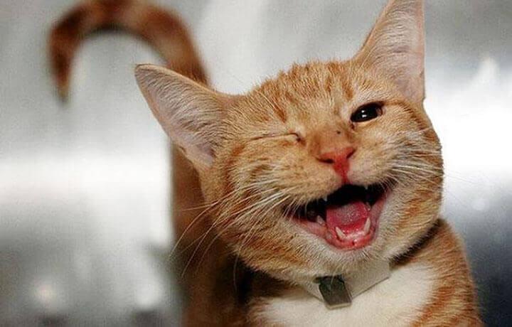 В каких случаях использование успокаивающих средств для кошек оправдано?
