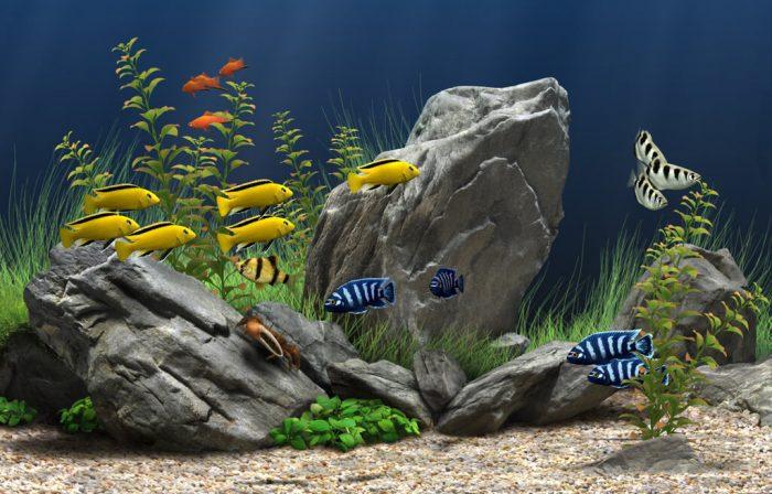 Виды декорации для аквариумов