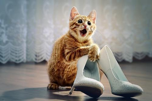 Воспитание котов