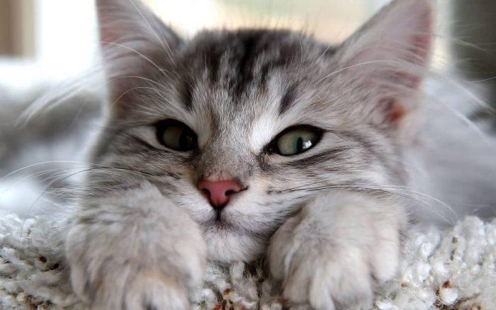 Вредные привычки хозяина, опасные для здоровья его кошки