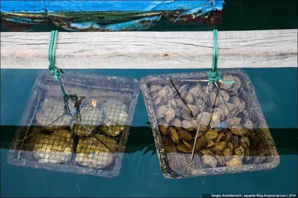 Всё про виды «жемчужных» моллюсков