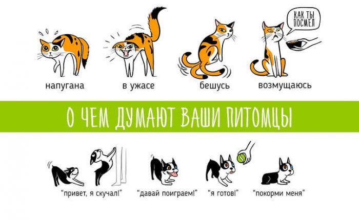 Язык тела: как понять кошку