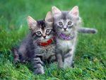 Зачем кошке ошейник?