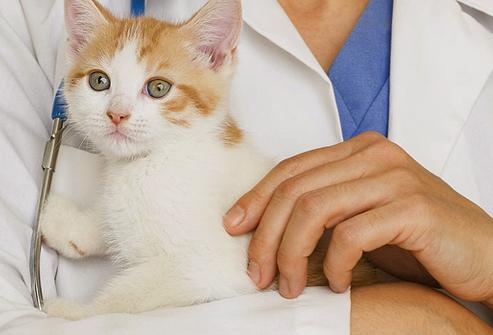 Зачем котёнку прививки, если он не будет гулять на улице?