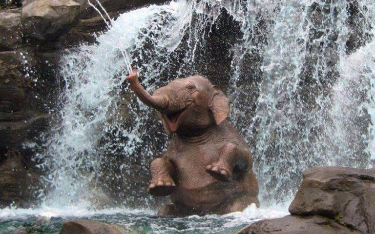 Жизнь и любовь слонов - это интересно!