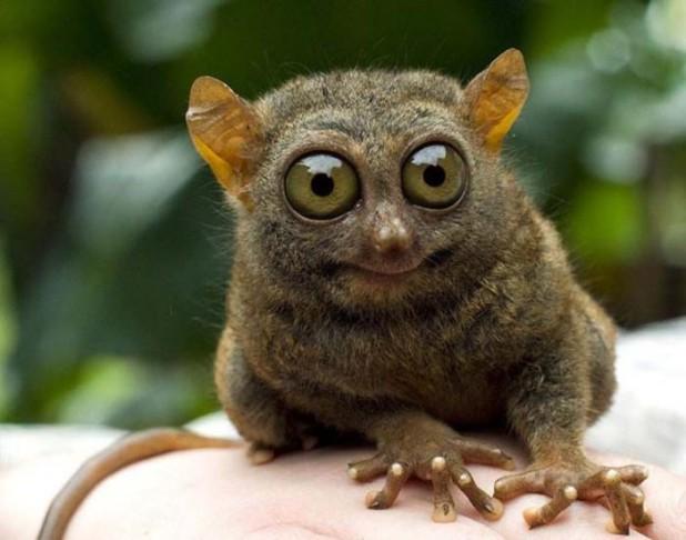 6 любопытных фактов из животного мира